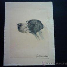 Arte: LÉON DANCHIN (1887-1938). 195/500. MEDIDAS PLANCHA: 37 X 29 CM. FIRMADO A LÁPIZ.. Lote 36505171