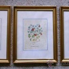 Arte: LOTE DE TRES GRABADOS, PLANTAS Y FLORES, ENMARCADO DORADO, MEDIANOS. Lote 39137445