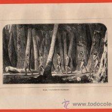 Arte: LITOGRAFIA/GRABADO - BRASIL - LOS PURIS EN SUS BOSQUES - VIAJERO UNIVERSAL - AÑO 1861 -. Lote 43589365