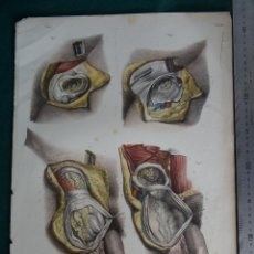 Arte: LITOGRAFIA - DEL ATLAS DE ANATOMIA HUMANA DE BOURGERY Y JACOB - PARIS - 1831 - 1854 -. Lote 44821909