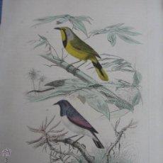 Arte: EDOUARD TRAVIES - LE PIE-GRIECHE ET LE MERLE - GRABADO ACUARELADO A MANO - SIGLO XIX. Lote 53991750