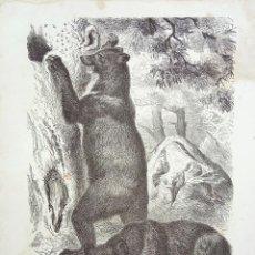 Arte: EL OSO PARDO, GRAN DETALLISMO, 1876, 23 X 16 CM. Lote 54487599