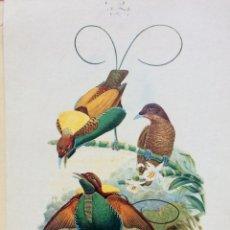 Arte: LITOGRAFÍA AVES (PUBLICIDAD MEDICAMENTOS VETERINARIOS) AÑOS 60. Lote 75326119