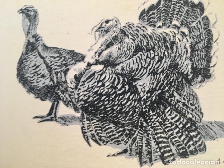 Arte: Dibujo litografico pavos reales original pintor Alfredo Enguix lamina 80/250 20x13,5 cm - Foto 2 - 88857864