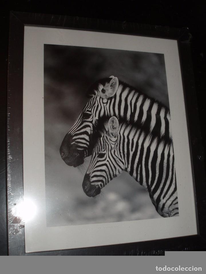 lamina fotografica enmarcada cebras - Comprar Litografías en ...