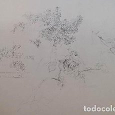 Arte: ANTONIO LÓPEZ: MEMBRILLOS Y ROSA, 1992 / LITOGRAFÍA NUMERADA Y FIRMADA A LÁPIZ. Lote 105046127