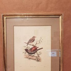 Arte: LITOGRAFIA ENMARCADA,PAJAROS,CENTRITES OREAS,J.SMIB,IMPRESO M&N HANHART,VER DETALLES.. Lote 112182279