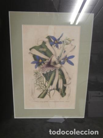 Arte: Litografia coloreada a mano G. Severeyns - Foto 2 - 121059479