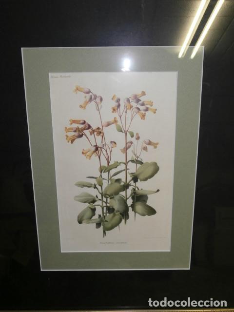Arte: Litogrfia coloreada G.Severeyns S.XIX - Foto 2 - 121080295