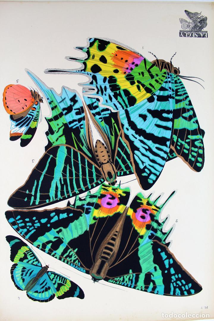 Arte: L-4976.E.A. SEGUY. PAPILLONS. PORTFOLIO DE 20 FOTOTIPIAS COLOREADAS. DISEÑO ART NOVEAU. AÑO 1925. - Foto 10 - 130123739