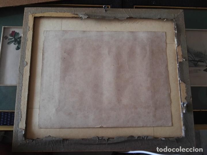 Arte: Thomas McLean 3 litografias Armand Robin de pajaros (1788-1875) - Foto 12 - 132496626