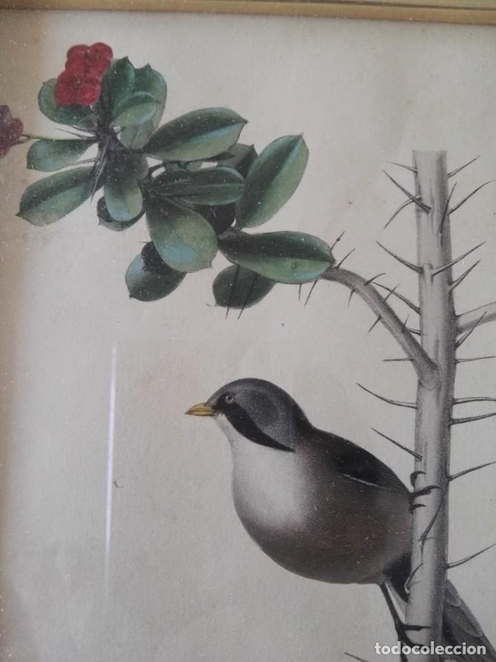 Arte: Thomas McLean 3 litografias Armand Robin de pajaros (1788-1875) - Foto 15 - 132496626