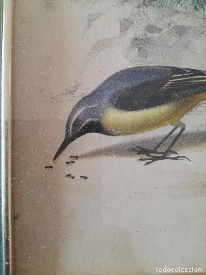 Arte: Thomas McLean 3 litografias Armand Robin de pajaros (1788-1875) - Foto 17 - 132496626