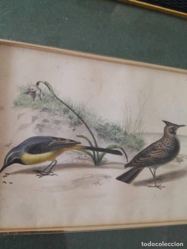 Arte: Thomas McLean 3 litografias Armand Robin de pajaros (1788-1875) - Foto 19 - 132496626