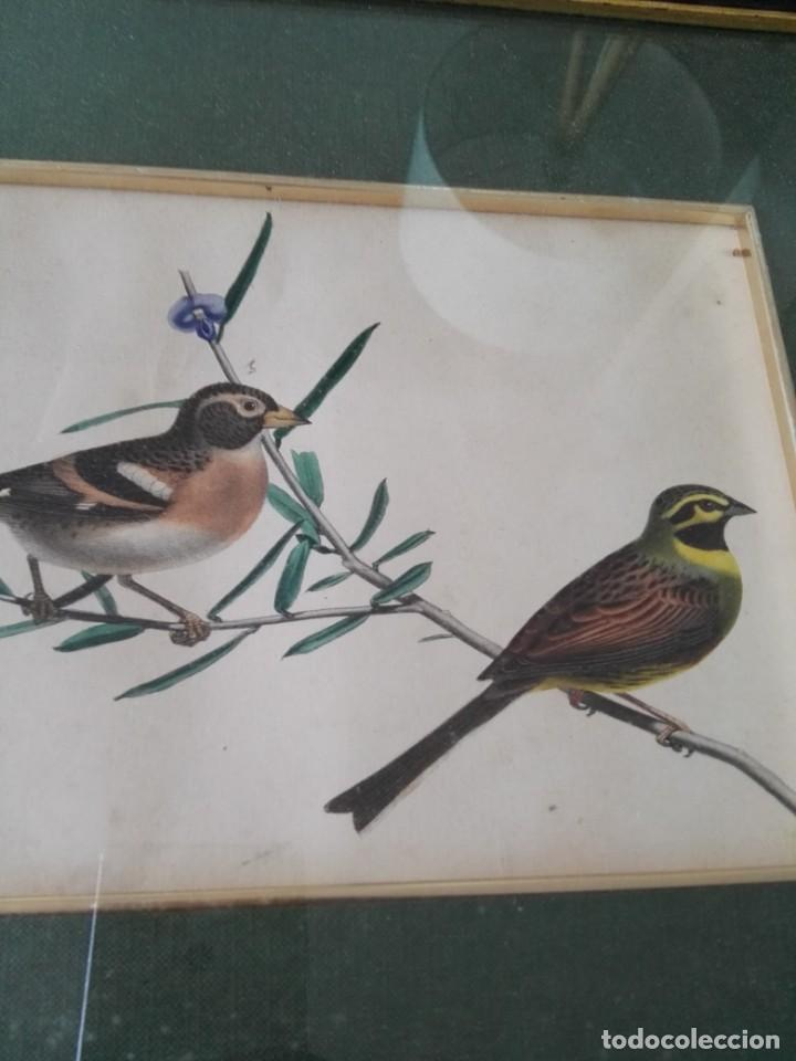 Arte: Thomas McLean 3 litografias Armand Robin de pajaros (1788-1875) - Foto 20 - 132496626