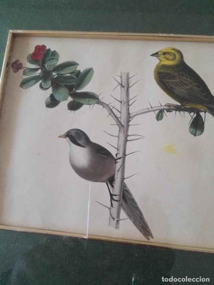Arte: Thomas McLean 3 litografias Armand Robin de pajaros (1788-1875) - Foto 21 - 132496626