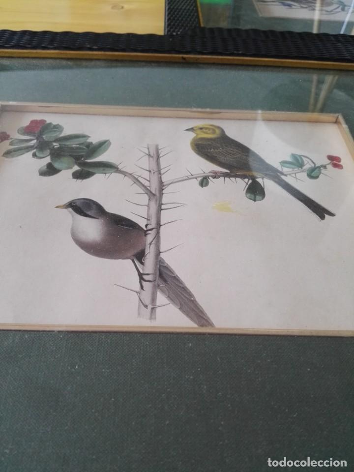 Arte: Thomas McLean 3 litografias Armand Robin de pajaros (1788-1875) - Foto 22 - 132496626