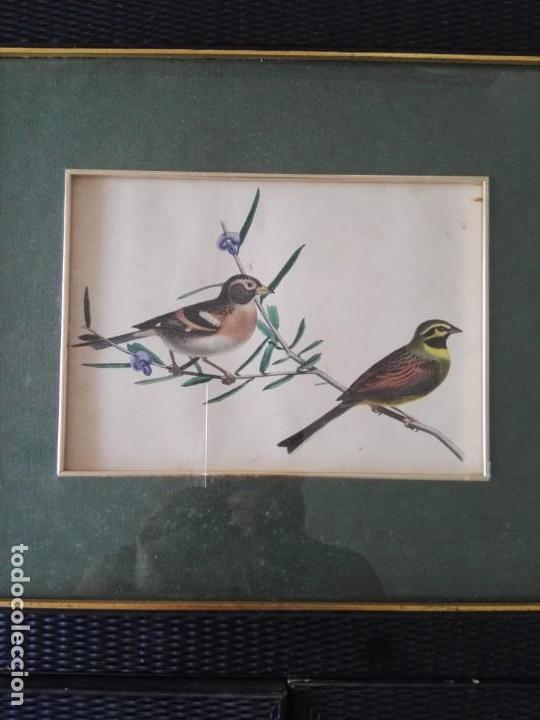 Arte: Thomas McLean 3 litografias Armand Robin de pajaros (1788-1875) - Foto 8 - 132496626