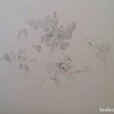 Arte: ANTONIO LÓPEZ, LITOGRAFÍA DE LA SUITE OLIMPICA, FIRMADA Y NUMERADA. Lote 160849050