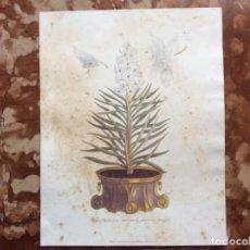 Arte: LITOGRAFÍA DEL XIX 35CMX28.. Lote 162375118