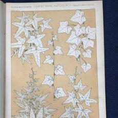 Arte: * HOJAS NATURALEZA * LEAVES FROM NATURE Nº 3 - GRAMMAR OF ORNAMENT / JONES OWEN - 1868. Lote 192247932