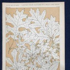 Arte: * HOJAS NATURALEZA * LEAVES FROM NATURE Nº 4 - GRAMMAR OF ORNAMENT / JONES OWEN - 1868. Lote 192248058