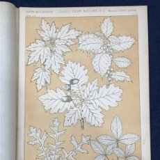 Arte: * HOJAS NATURALEZA * LEAVES FROM NATURE Nº 5 - GRAMMAR OF ORNAMENT / JONES OWEN - 1868. Lote 192248150