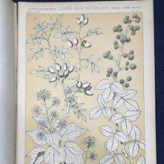 Arte: * HOJAS NATURALEZA * LEAVES FROM NATURE Nº 6 - GRAMMAR OF ORNAMENT / JONES OWEN - 1868. Lote 192248215