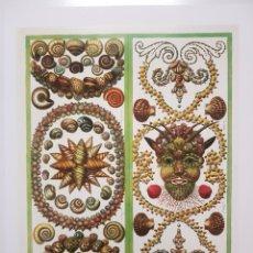 Arte: ALBERTUS SEBA: ORNAMENTOS CONCHAS Y MOLUSCOS. LITOGRAFIA ORIGINAL CON MATRICULA LEGAL DEL EDITOR.. Lote 194727860