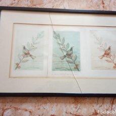 Arte: TRES LITOGRAFIAS DE PAJAROS DEDICADAS Y FRIMADAS EN 1989. Lote 205364102