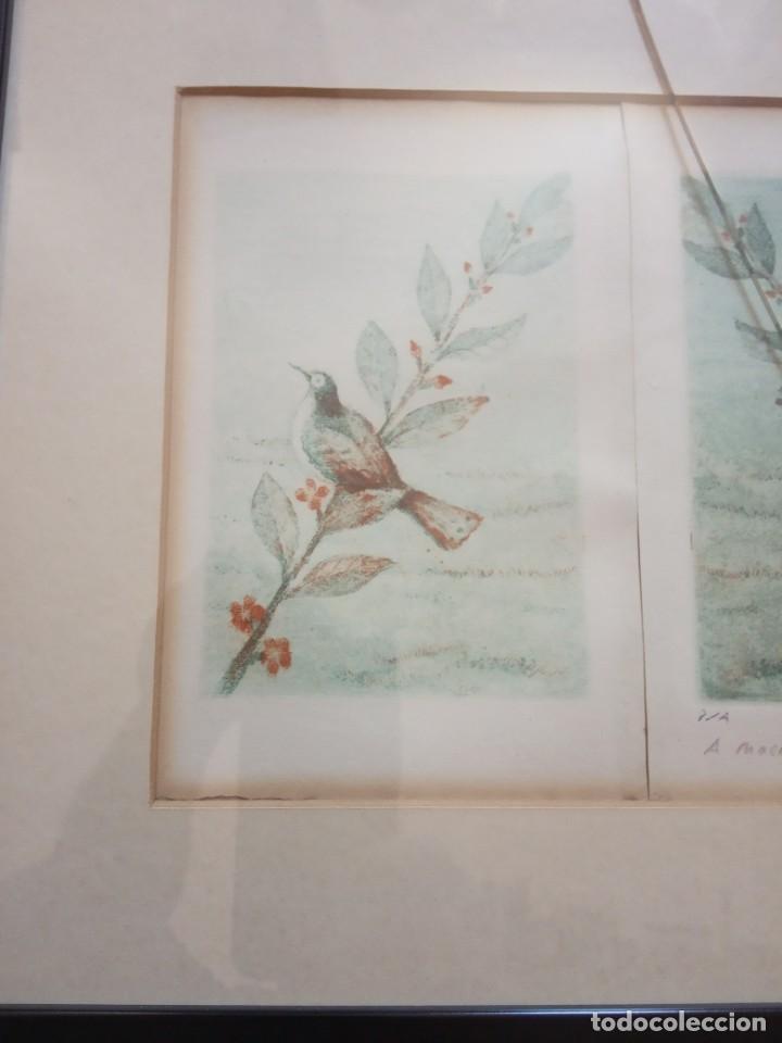 Arte: TRES LITOGRAFIAS DE PAJAROS DEDICADAS Y FRIMADAS EN 1989 - Foto 2 - 205364102