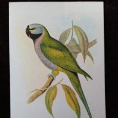 Arte: GRABADO: LITOGRAFÍA A COLOR. PALEORNIS DERRIANUS (AVE). GRABADOR; J. GOULD Y H. C. RICHTER. Lote 206812681
