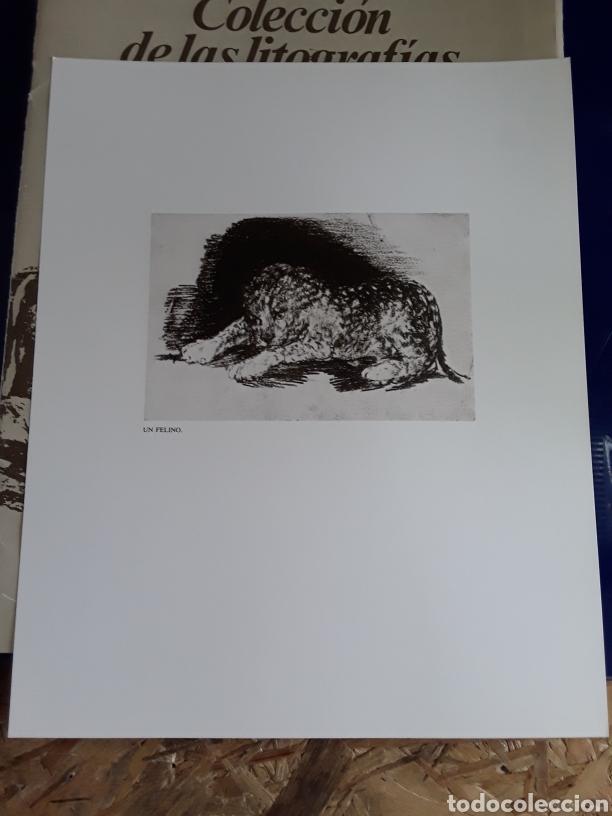 Arte: Coleccion de 22 litografías de GOYA(estudio previo del profesor Federico torralba) - Foto 25 - 208777101