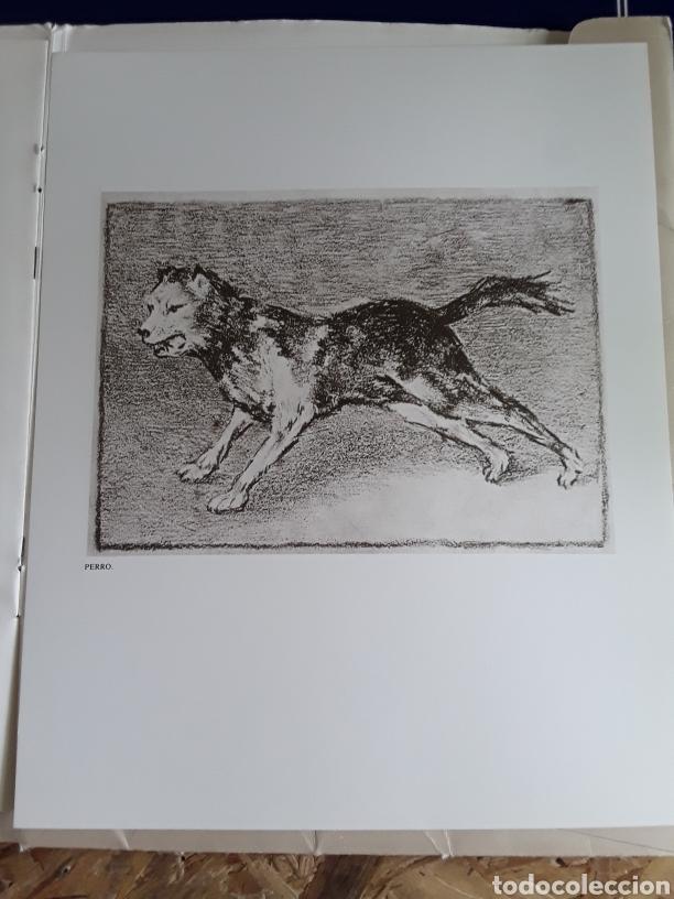 Arte: Coleccion de 22 litografías de GOYA(estudio previo del profesor Federico torralba) - Foto 26 - 208777101