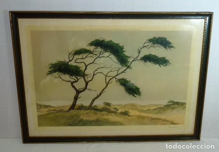 LITOGRAFIA ENMACADA - JAN KAIGE JR - MEIENDEL - PINES ON THE DUNES.93 X 67 CM. (Arte - Litografías)