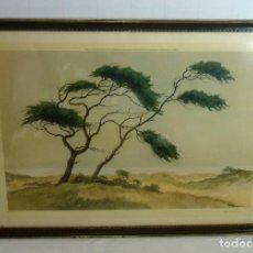 Arte: LITOGRAFIA ENMACADA - JAN KAIGE JR - MEIENDEL - PINES ON THE DUNES.93 X 67 CM.. Lote 208899020