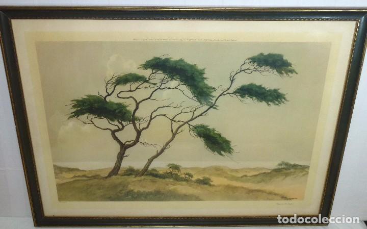 Arte: Litografia Enmacada - Jan Kaige Jr - Meiendel - Pines On The Dunes.93 x 67 Cm. - Foto 2 - 208899020