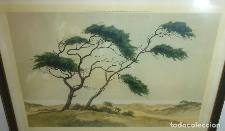 Arte: Litografia Enmacada - Jan Kaige Jr - Meiendel - Pines On The Dunes.93 x 67 Cm. - Foto 3 - 208899020