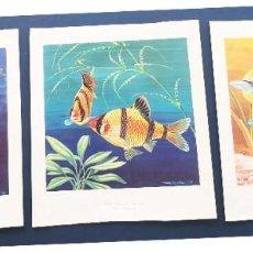 Arte: COLECCION DE 6 LAMINAS 35X40. Lote 221108182