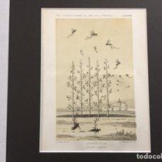 Arte: AVISPAS VEGETALES. REAL SOCIEDAD ECONOMICA DE JEREZ DE LA FRONTERA ESPOSICION DE 1856.. Lote 221927098