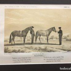 Arte: JEREZ DE LA FRONTERA ESPOSICION DE 1856. PRIMEROS PREMIOS. CABALLO DE CARRERA DE 6-11 DE ALZADA Y 5. Lote 221927507