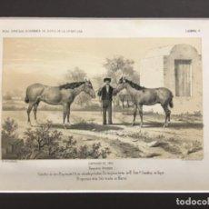 Arte: JEREZ DE LA FRONTERA ESPOSICION DE 1856. PRIMEROS PREMIOS. CABALLOS DE TIRO-BAYOS 6 AÑOS. Lote 221927607
