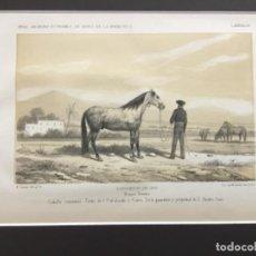 Arte: JEREZ DE LA FRONTERA ESPOSICION DE 1856. PRIMER PREMIO. CABALLO SEMENTAL. TORDO 5 AÑOS. ANDRES CANO.. Lote 221927927