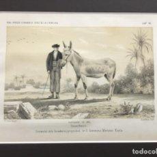 Arte: JEREZ DE LA FRONTERA ESPOSICION DE 1856. PRIMER PREMIO. SEMENTAL SE LA GANADERIA Y PROPIEDAD DE.... Lote 221928070