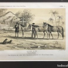 Arte: JEREZ DE LA FRONTERA ESPOSICION DE 1856. PRIMER PREMIO. 3 POTROS DE 3 AÑOS GANADERIA MANUEL ROMERO. Lote 221928201
