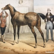 Arte: CORREDOR DE CABALLOS. LE MARCHAND DE CHEVAUX. L. TURGIS. (33,8 X 47,5 CM). Lote 222429531