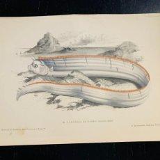Arte: LITOGRAFIA ORIGINAL DE 1876 DEL IMPRESIONANTE LIBRO LES POISSONS - LOS PECES - GERVAIS ET BOULART -. Lote 236028485