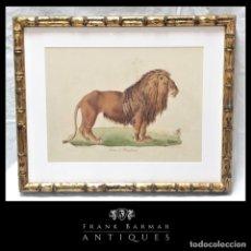 Arte: CUADRO LITOGRAFÍA LION LEÓN DE BARBARIE ILUSTRACIÓN HISTORIA NAT MAMÍFEROS DE ÁFRICA POR C. DE LAST. Lote 260860930