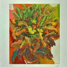 Arte: RENATO GUTTUSO * LA PLANTA * LITOGRAFIA FIRMADA * LIMITADO # 14/50. Lote 267077769