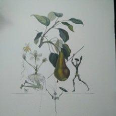Art: LITOGRAFÍA SALVADOR DALÍ 50X65. Lote 268158529